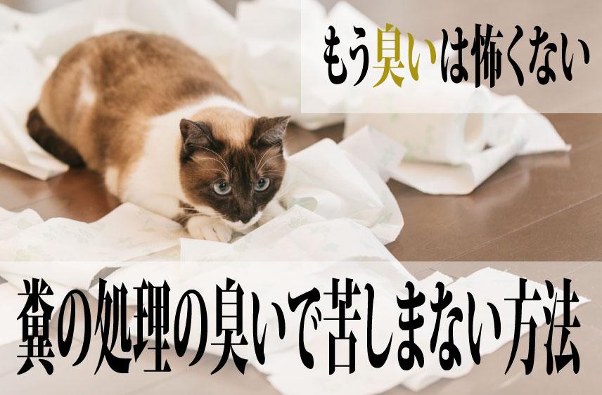 飼い猫のフンの処理の際、臭いで苦しまない方法