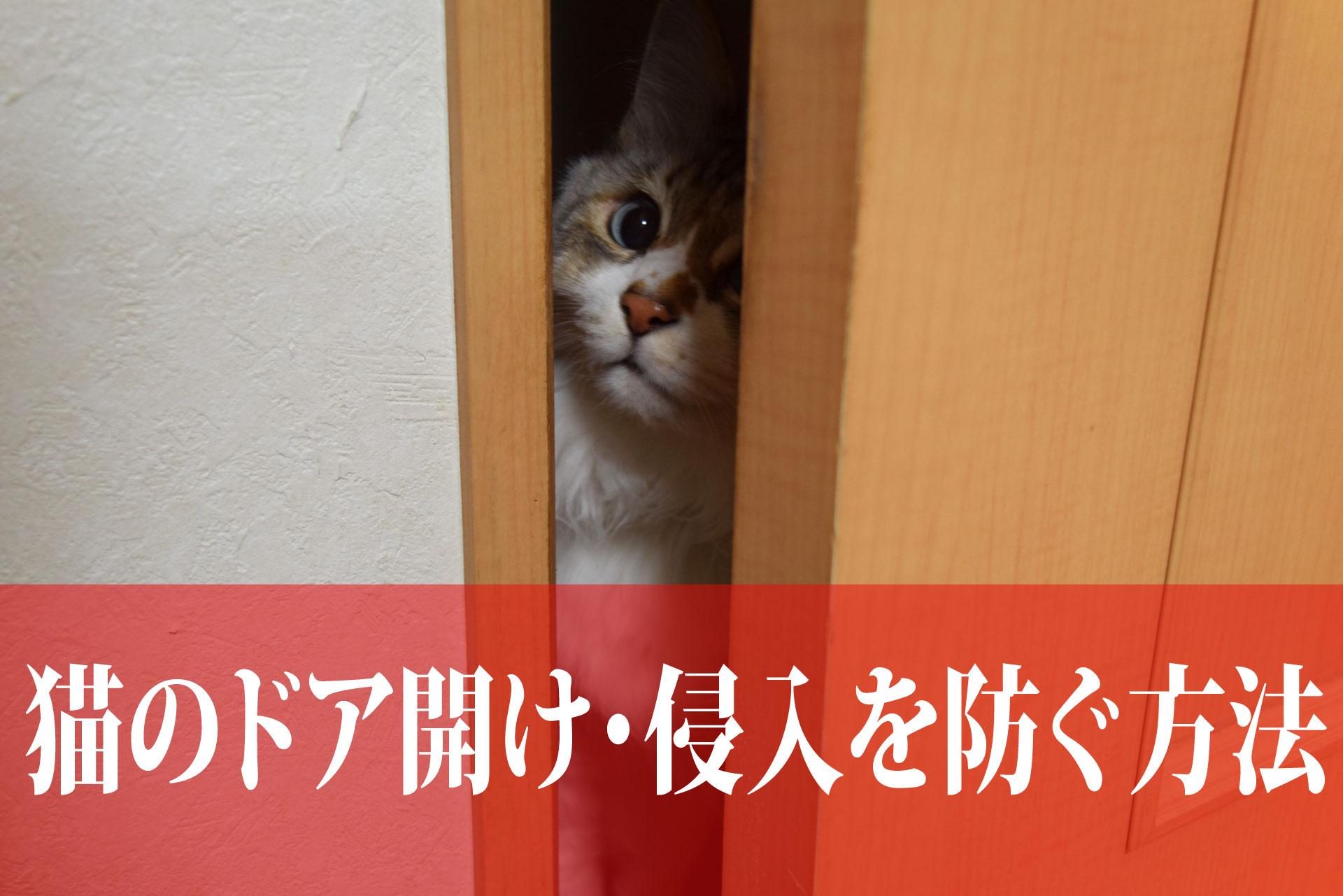 絶対に猫にドアを開けられない方法(スライドドア編)