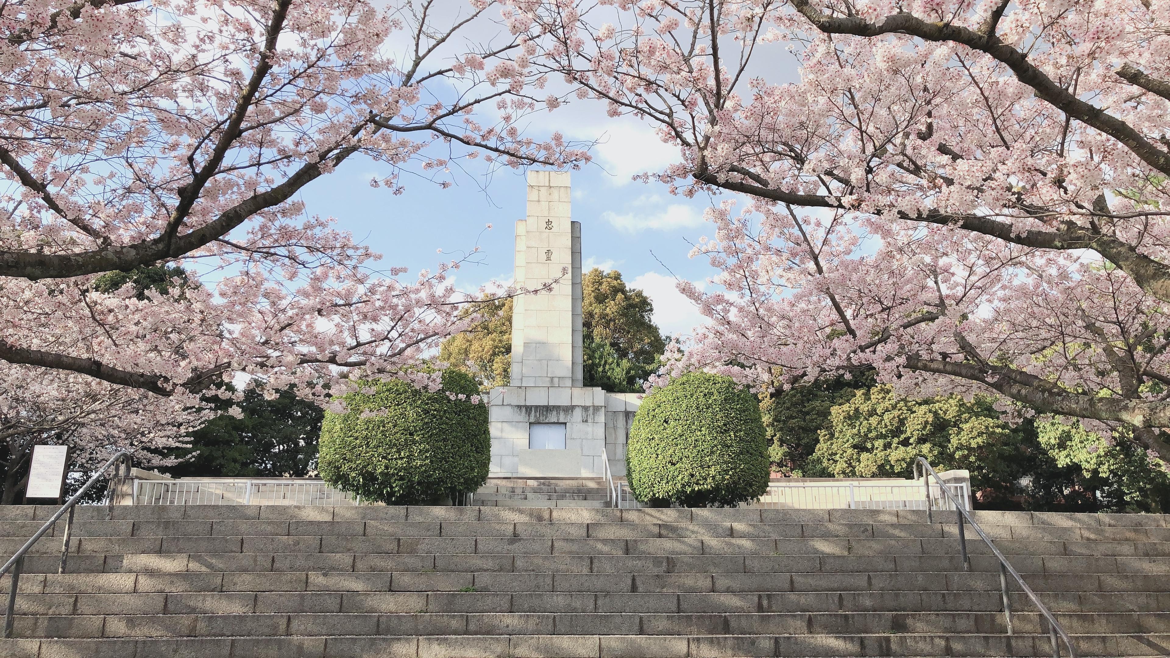 北九州花見スポット🌸足立山の忠霊塔がある公園